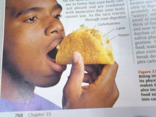 wtf college life taco textbook