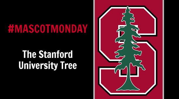 Mascot Monday: The Stanford Tree | Campus Riot Stanford Tree 2013
