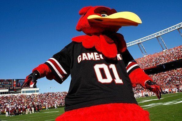 South Carolina Gamecocks Mascot Monday