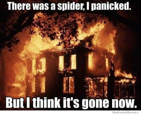 There Was a Spider and I Panicked Meme