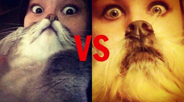 Cat beard vs dog beard