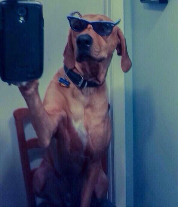 Dog selfie - Selfie Olympics