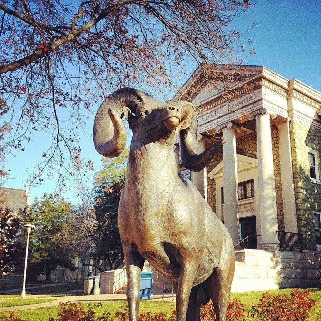 westchester university