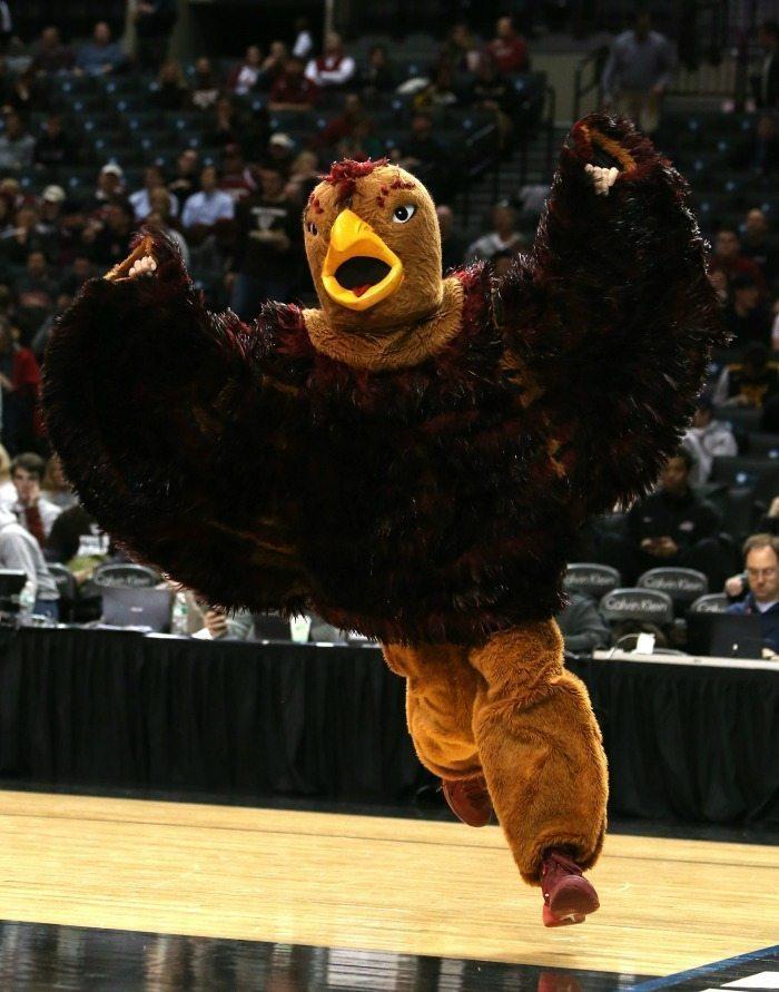 St. Joseph's Hawk Mascot 2