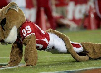 University of Houston Cougars - Mascot Monday - Shasta