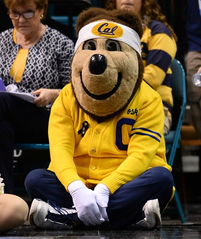 UC Berkeley Golden Bears - Cal Bears - Mascot Monday - Oski 1