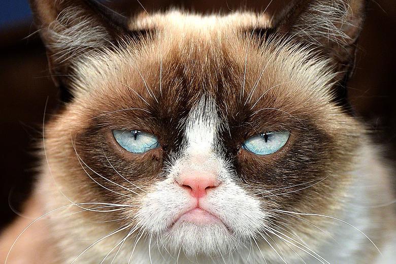 Grumpy Cat: Every College Student's Spirit Animal