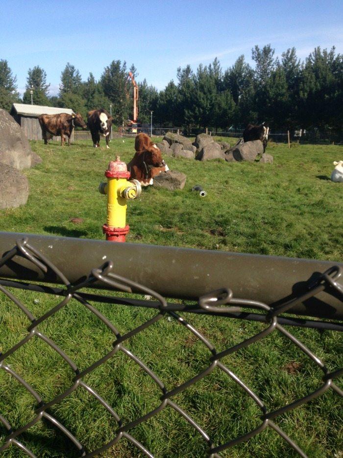 zoos europe according to emma