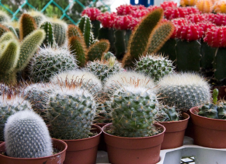 Grow a Garden in Your Dorm Room